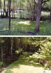 I used this swamp as inspiration